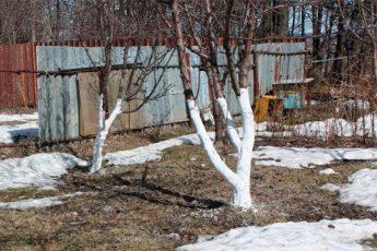 Пять дел садовода, которые обязательно нужно сделать в марте