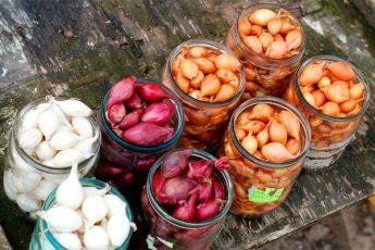 Выбираем лук севок для посадки