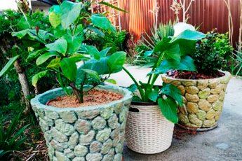 Кашпо для комнатных растений: делаем своими руками