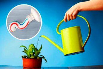 Удобрения для комнатных растений: целых 6 вариантов