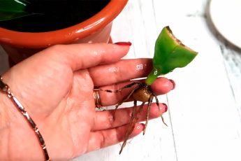 Эффективный способ размножения растений черенками: всего два компонента