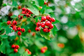 8 растений, на которых всегда есть тля