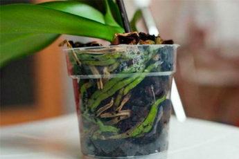 Хотите, чтобы орхидея цвела круглый год? Вот простые правила