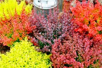 Цветник опустел: добавляем ярких красок