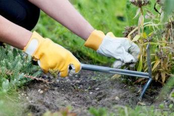 Золотая пора — начинаем готовить любимый сад и огород к зимним холодам