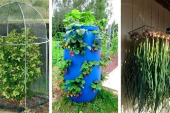 40 неожиданных и полезных идей для огорода и сада