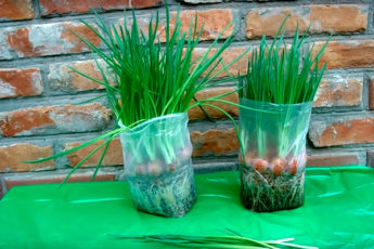 Идеальный способ, который подарит море зеленого лука в любое время года