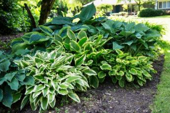 Идеальные цветовые решения для вашего сада
