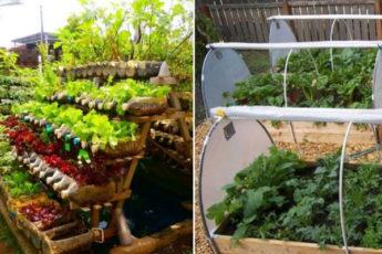 Украшаем огород и получаем крутой урожай: идеи красивых грядок
