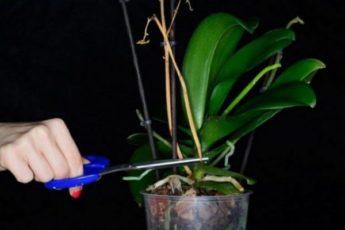 Элементарный способ, который заставит цвести даже самую «вредную» орхидею!