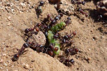 Как избавиться от муравьев в теплице: эффективные методы и советы бывалых огородников