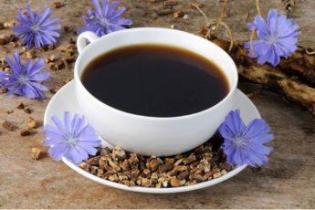 Корень цикория — отличный заменитель кофе, который лечит