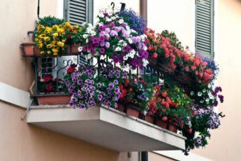 7 готовых схем для выращивания цветов за окном квартиры