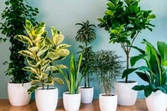Флористы рекомендуют: советы, которые заставят комнатные цветы расти как на дрожжах