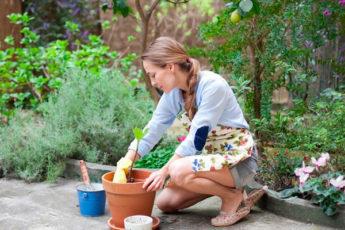 Типичные ошибки при оформлении сада