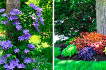 22 яркие и красивые идеи клумб вокруг дерева